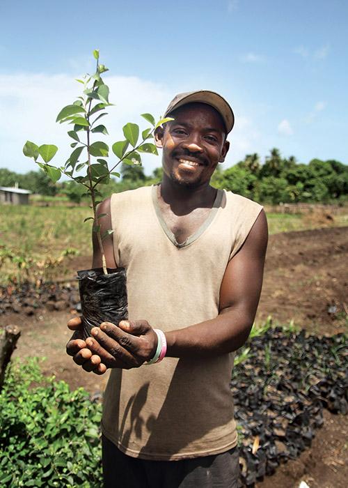 Plant 100 Fruite Trees