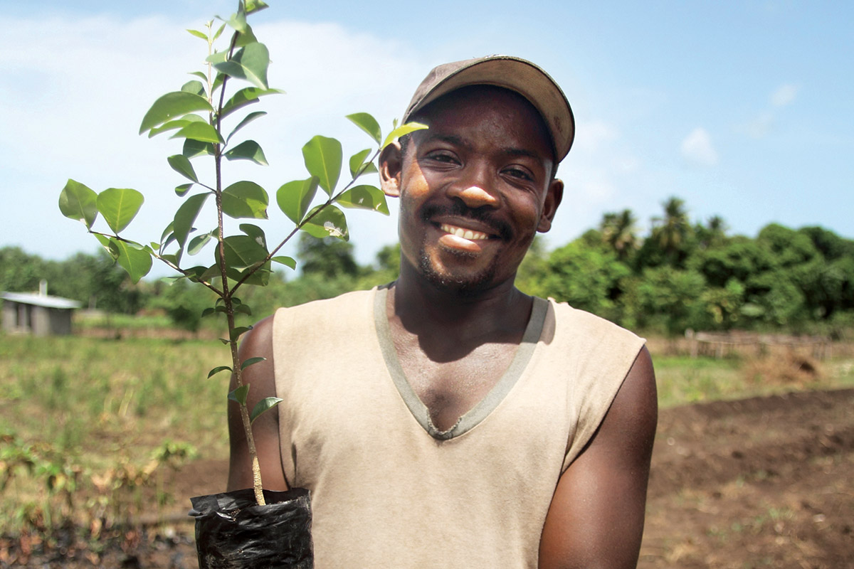 Plant 100 Fruit Trees